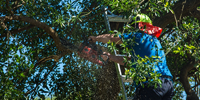 About Us | Nord Tree Service - Bloomington, IL